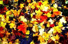 folhas de outono - Pesquisa do Google