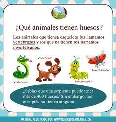 490 Ideas De Vertebrados E Invertebrados Vertebrados E Invertebrados Vertebrados Clasificación De Animales