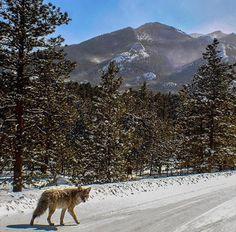 Estes Park, Colorado | Just act natural.... Rocky Mountain National Park -