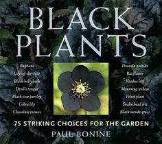 Black Plants: 75 Striking Choices for the Garden from Timber Press
