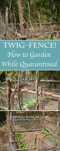 Victory Gardens with foraged items while quarantined is a simple way to supplement your food supply. Stuck at home during this Quarantine, GROW! Outdoor Plants, Garden Plants, Outdoor Gardens, Ariana Grande Facts, Chicken Garden, Building A Fence, Victory Garden, Forest House, Garden Inspiration