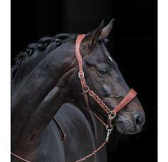 Felix Bühler Argentijns lederen halster - 440710-C-BR - 4  74,95 Horse Training Tips, Horse Tips, Horse Halters, Horse Saddles, Horse Stalls, Horse Barns, Equestrian Problems, Equestrian Quotes, Western Horse Tack
