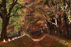Maple tunnel at Kawaguchi Lake, Fujikawaguchiko, Japan - MR.ANUJAK JAIMOOK/Getty Images