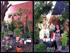 Arte Brasil | Cuidados Básicos de Jardinagem - Mariah Villasboas