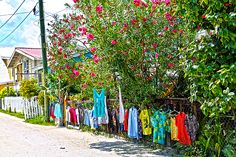 The Original Popup Store Caye Caulker Belize by Lee Vanderwalker Caye Caulker Belize, Pop Up, Greeting Cards, Wall Art, The Originals, Photos, Dibujo, Pintura, Art