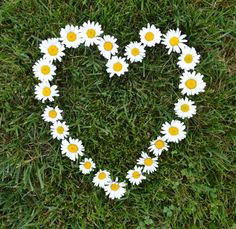 Heartfelt Daisy. Nursery, wedding or gallery wall photo.