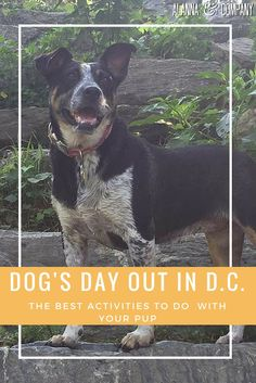 A Dog's Day Out in D.C. - Alanna & Company