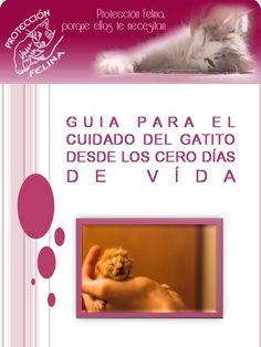 Como-Salvar-Gatitos-recien-nacidos.jpg (720×960)