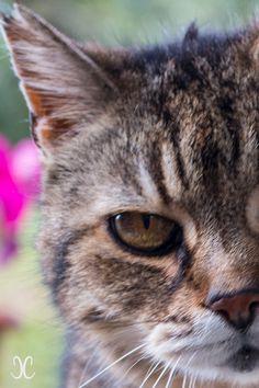 Die 33 Besten Bilder Von Toskana Katzen In 2019 Katzen