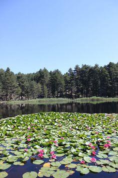 Corsica - Lacs Naturels - Lac de Creno . Lavu à Crena . Situé dans la région des Deux-Sorru, au-dessus des villages d'Orto et de Soccia,de Guagno dans le massif du Monte Rotondo, (Corse-du-Sud)le lac culmine à 1 310 mètres. Son émissaire est le ruisseau de Creno, qui se jette dans le Grossu ou Guagno, un affluent du fleuve le Liamone. Corsica, Le Havre, Travel Abroad, Wonders Of The World, Seaside, Golf Courses, Dolores Park, Island, Landscapes