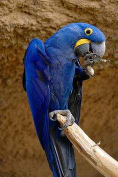 Papagei 02 | da Sebastian Ukas Animals Images, Animals And Pets, Animal Pictures, Parrot Tattoo, African Grey Parrot, Funny Birds, Bird Cages, Tropical Birds, Cute Bears
