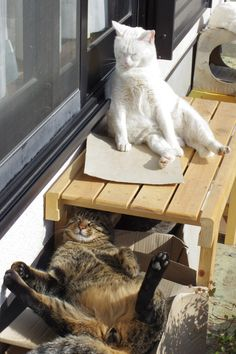 Cats Sunbathing♥️