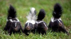 Cutest little stinkers... - Imgur