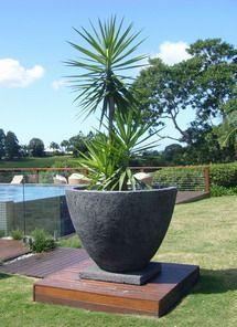 Image from http://www.potanico.com.au/images/left.jpg.