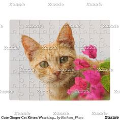 Cute Ginger Cat Kitten Watching Eyes Head Photo ** Jigsaw Puzzle Funny Animal Faces, Cute Funny Animals, Photo Jigsaw Puzzle, Jigsaw Puzzles, Kittens Cutest, Cats And Kittens, Cute Ginger, Ginger Cats, Diy Stuffed Animals
