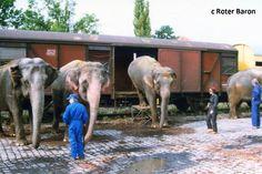 Der Zirkus kommt m. 15 B. - Eisenbahnforum Nordostbayern