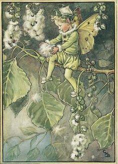 Illustration for the Poplar Fairy