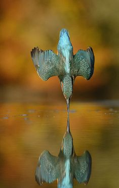 Nailing the perfect shot sometimes requires a lot of patience. Scottish photographer Alan McFadyen would know: he spent an estimated 6 years, 4,200 hours,