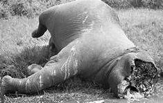elefanter - Yahoo Bildesøkresultater Elephant, Animals, Image, Animales, Animaux, Elephants, Animal, Animais