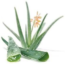 Know about the world of Goodness of Aloe Vera.