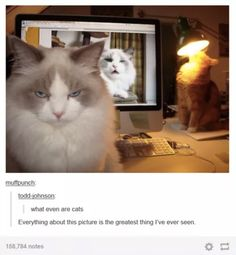 Like, so so so weird: | 24 Tumblr Posts Every Cat Owner Will Immediately Recognize