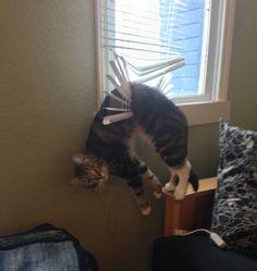 j' fais comment chat coincé!