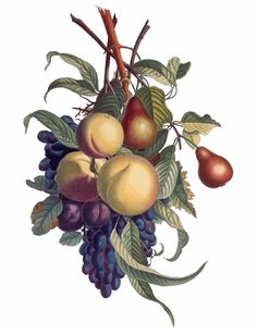 El dibujo botánico | El Dibujante                                                                                                                                                     Más