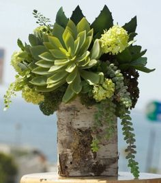 Birch Silk Succulents..Beautiful!
