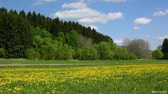 Em meio a uma paisagem montanhosa, a Floresta do Palatinado, é a maior floresta na Alemanha e uma das maiores da Europa. Ela compreende uma área de 828.000 hectares. A reserva florestal se estende ao longo da fronteira franco-alemã. Segundo dados da Unesco, quase três quartos da área montanhosa são cobertos por castanheiras, faias, abetos e pinheiros. A florestas chama a atenção por seus imponentes penhascos de arenito, pelas numerosas cavernas e o habitat de espécies de plantas e animais…