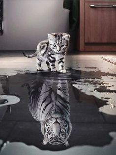 ♥♥♥ DON'T UNDERESTIMATE THE POWER OF A CUTE KITTY ♥♥♥
