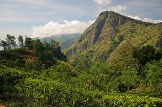Little Adam's Peak, Ella, Sri Lanka (www.secretlanka.com)