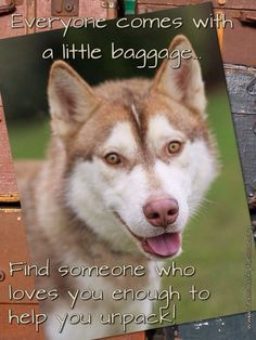 Texas Husky Rescue Husky Humor, Husky Rescue, Great Words, Foxes, Organizations, Best Friends, Household, Cute Animals, Puppies