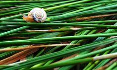 Slakken in de moestuin? Ze eten alles op voordat jij er aan kunt beginnen! Hier lees je hoe je van slakken af komt: www.insideandout.nl - biologische bestrijding moestuin tuin