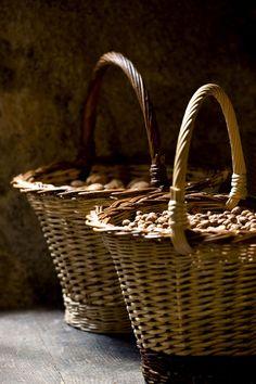 Harvest of walnuts Saveurs Magazine