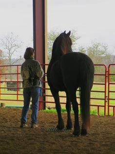 Horse clicker training - Staas looking out toward the field