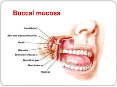 What is a Cancer of the buccal mucosa? It is defined as a disorder in which there is a formation of the cancer cells in buccal mucosa. It keeps on changing and is quite common in the developed countries. It can occur due to the irritation as well as trauma which are chronic in the nature. The...