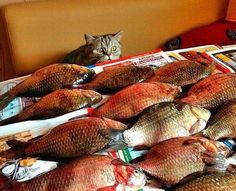 Only pinned for this pic of cat and fish.                 Other random pics of the day....meh.
