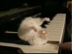 Hamster on a Piano...best video!