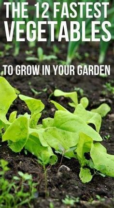 12 Fastest Growing Vegetables Not all vegetables take from spring from fall to mature. If you're getting a late start on your home garden or live in a region with a short growing season, fear not. There are many health… Veg Garden, Edible Garden, Lawn And Garden, Garden Plants, Vegetable Gardening, Indoor Garden, Rooftop Garden, Veggie Gardens, Starting A Vegetable Garden