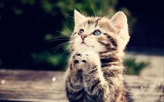 Description Free  Cute Cat Praying Wallpaper