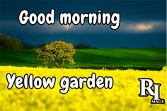 Good morning with yellow garden Good Morning Nature Images, Hd Images, Feel Good, Feelings, Yellow, Garden, Pictures, Beautiful, Photos