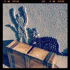 Schelpenkat in Frankrijk!  (Taken with Instagram)