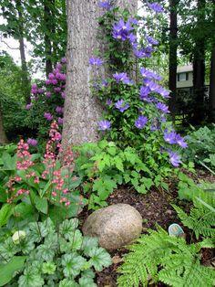 The Multi-Faceted Gardener - FineGardening The Multi-Faceted Gardener - FineGar. The Multi-Faceted Gardener - FineGardening The Multi-Faceted Garden Back Gardens, Outdoor Gardens, Front Yard Gardens, Amazing Gardens, Beautiful Gardens, Fine Gardening, Container Gardening, Vegetable Gardening, Gardening Tips