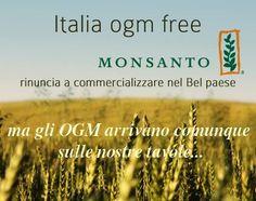 lifeme: OGM IN ITALIA: LISTA ALIMENTI ED ADDITTIVI CHE CONTENGONO O POSSONO CONTENERE #OGM #alimenti #mangiare #ricette #salute