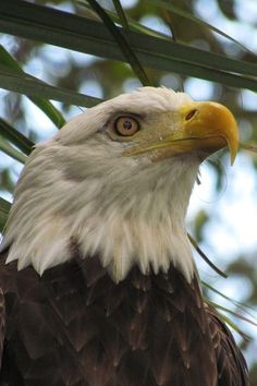 500 Best Birds Of Prey Images In 2020 Birds Of Prey Birds Prey