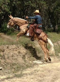 I will have a mule or two. Not only as the nanny animal, but also for badass trail riding