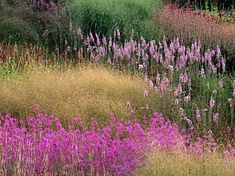 Garden by Piet Oudolf ... natural swathes of gentle colour  |  photo by Neil Holmes *