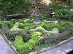 Knot gardens on pinterest knots gardens and the knot for Herb knot garden designs