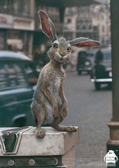 'Rabbit - Character Study' for Christopher Robin, by Michael Kutsche Male Character, Character Design, Pooh Bear, Tigger, Eeyore, Disney Pixar, Felt Animals, Cute Animals, Christopher Robin Movie