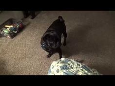 dog playing with mario - YouTube So cute